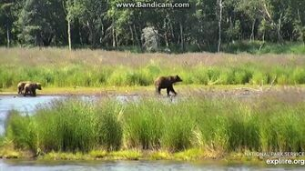 505 & Cubs Chase off Young Sub 2019-07-05 22-59-48-849 by Birgitt