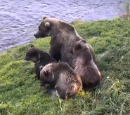 39 PIC 2016.10.22 w 3 SPRING CUBS NSBOAK POSTED 2018.02.22 04.35