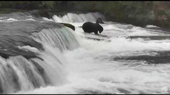 7;5? 082416 747 and 474? fight Katmai National Park and Explore by Mickey Williams