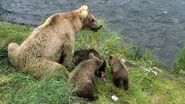 GRAZER 128 PIC 2016.07.08 w 3 SPRING CUBS JEN POSTED 2019.05.12 01