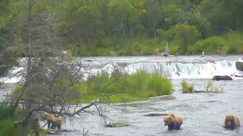 08.21.2017 - 128 Grazer and Cubs at the Falls - Riffles View