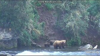 505 Brings Her Two Spring Cubs to Brooks Falls 2018-08-04 by Birgitt