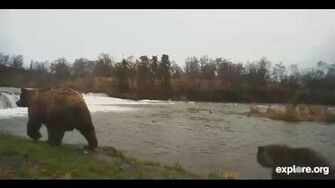 Brooks Falls and River Watch Cam with 402 and her 2 cubs 10 31 2013 452 PM by Linda Jett