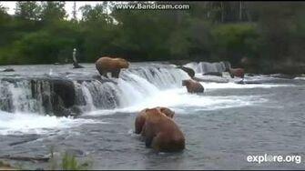 Explore org bearcams Brooks Falls, video by Markindify