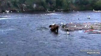 4 Jul 2020 Unknown Boar, video by mckate