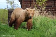 INFO BEARS SEEN 2019.05.29 WHO 284s 2016 SUBADULT MAYBE BL FB 2019.05.29 10.24 FB POST w PIC BY KARA STENBERG PIC ONLY