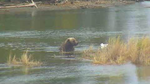 River Watch Bear Cam 09-22-2018 14 01 55 - 15 01 55 Explore Recorder