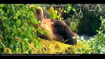 Bandicam 2015 07 26 17 11 11 393, video by Nancy Clark
