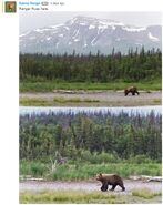 INFO BEARS SEEN 2018.06.16 14.15 BEAR SPOTTED ON LR RANGER RUSS 2018.06.16 15.16 COMMENT w PICS