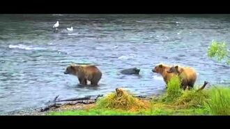 Mom 132 & Cubs & Indy ~ 2015 07 26, video by Victoria White.