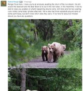 INFO BEARS SEEN 2018.06.17 435 & 2 YEARLINGS & 3 SUBADULTS RANGER RUSS 2018.06.17 13.47 COMMENT