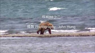 棕熊BB 284 and her 2 yearlings play on the point 2017 07 11 or prior, video by John Hung