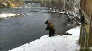 AMELIA 708 PIC 2017.10.22 SEARCHING FOR CUBS KCANADA POSTED 2019.05.05 01