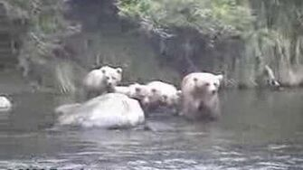 Grizzly Bear Cubs At Brooks Falls 2003 Season by Eric Jones