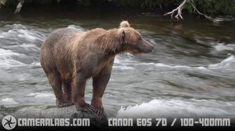 Brooks Falls Bears Fishing - with Canon EOS 7D and HV30, July 26 2010 video by Gordon Laing