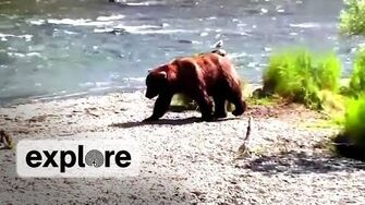 Brown Bear, Patches, Recovery EXPLORE LIVE CHAT
