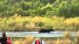 Lower River - Katmai National Park, Alaska Cam 09-05-2015 14 12 47 - 14 17 44 Explore Recorder video