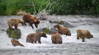Pictures from Katmai National Park 2 by Martin Kirsten
