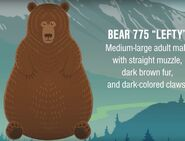 775 Lefty identification information from Mike Fitz's Meet Bear 775 Lefty video