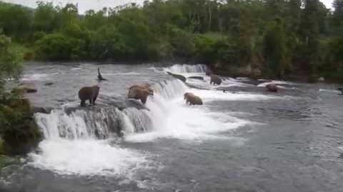 Katmai Falls 2015 video by Ross Baldwin