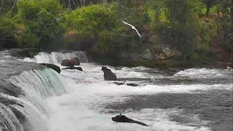 Brooks Falls Brown Bears Cam 08-28-2017 21 00 13 - 21 59 59