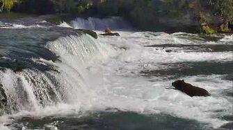 Brooks Falls Brown Bears Cam 08-31-2017 13 02 05 - 13 59 51 Explore Recorder video