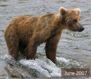 DENT 744 PIC 2007.06.xx NPS PHOTO 2010 BoBr PG 42 01