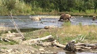 482 and Cubs at Margot Creek, video by Felicia