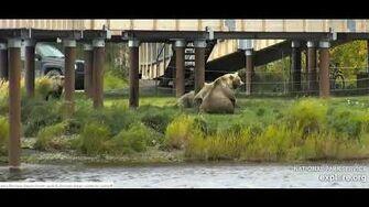 482 and jumbo cubs 9 22 2019, video by Ratna Narayan