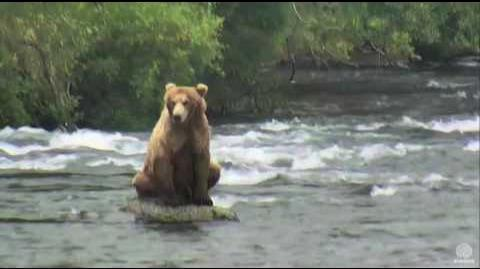 10 00 am 289 sitting on a rock 6-23-2016 video by Mickey Williams