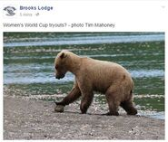 2015.06.10 08.10 BL FB WOMENs WORLD CUP TRYOUTS TIM MAHONEY PIC OF BEAR ON BEACH PLAYING w ROCK