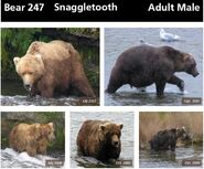 SNAGGLETOOTH 247 INFO 2014 BoBr PAGE 59 TOP ONLY