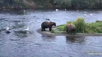 """""""hump"""" bear begs from 469 Patches 8 8 2019, video by Lani H"""