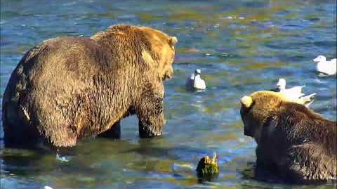 09.26.2017 - 480 Otis with Patched Bear Begging video by Brenda D-0