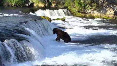 Bear Cam - Brooks Falls Cam 06-23-2017 21 00 03 - 21 59 52