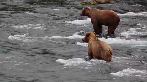 Bears 132 and 274 Overflow, June 2017 video by Melissa Freels