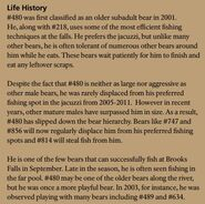 OTIS 480 INFO 2015 BoBr PAGE 61 LIFE HISTORY ONLY
