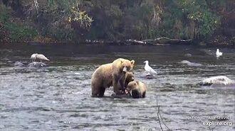 11 Sep 2019 719 Brings Her Cubs to Falls by McKate