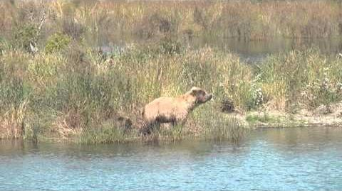 One Naughty Bear Cub 2015 video by Donna Archer-1