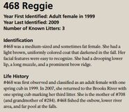 468 Reggie | Katmai Bearcams Wiki | FANDOM powered by Wikia