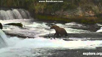 Standing Bear Brooks Falls July 29, 2014 by Arlene Beech