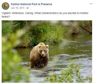 273 PIC 2015.07.16 or PRIOR w SPRING CUB KNP&P FB POST 2015.07.16 12.52