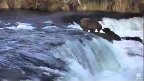 4 43 pm 151 Walker & 289 Katmai National Park 10 20 2015 video by Mickey Williams