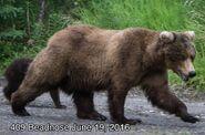 BEADNOSE 409 PIC 2016.06.19 NPS PHOTO 2016 FAT BEAR WEEK ROUND 1.2 409 vs 402