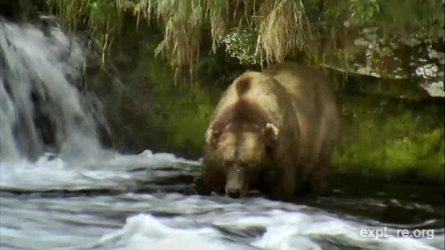 Love the bears lurch