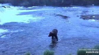 Unknown boar near platform 6 22 2020, video by Lani H