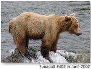 402 PIC 2002.06.xx 2015 BoBr PG 37 SUBADULT