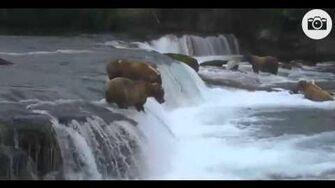 775 Lefty's Leap July 14 2015, video by Lyn Gulbransen