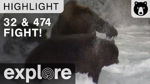 Bear 32 and 474 Fight! - Katmai National Park - Live Cam Highlight September 10, 2017-0