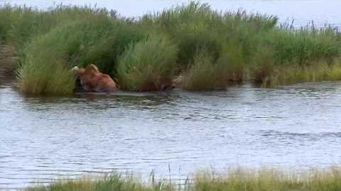 Lower River of Brooks River with bear fishing by MSO Belle